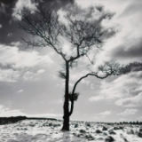 Dave Butcher - Lone Tree # 2, Peak District England