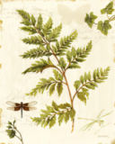 Lisa Audit - Ivies and Ferns I