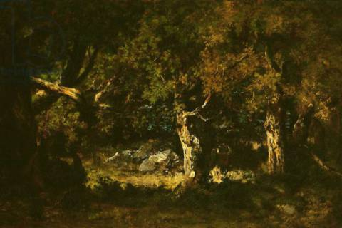 Woodland Thicket of artist Narcisse Virgile Diaz de la Pena, Oil, Tree, Wood, 18th, 19th, Dense, Trees, Canvas