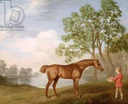 Pumpkin with a Stable-Lad, 1774 of artist George Townley Stubbs, Boy, Oil, Lad, Post, Panel, Horse, Groom, Racing