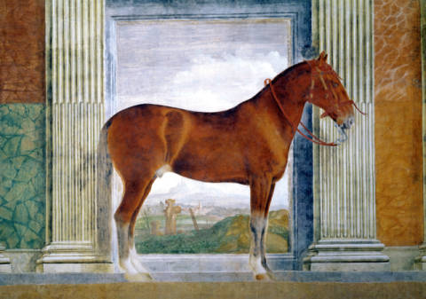 Sala dei Cavalli, detail showing a portrait of a chestnut horse from the stables of Ludovico Gonzaga III of Mantua, 1528 of artist Giulio Romano, Oeil, Room, Niche, Bridle, Fresco, Trompe, Horses, Pelham
