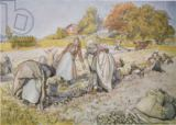 Carl Larsson - Digging Potatoes, 1905