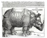 Albrecht Dürer - Rhinoceros, print given to Maximilian I (1459-1519) by the King of Lisbon (1495-1521), 1515