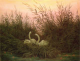 Caspar David Friedrich - Swans in the Reeds, c.1820