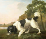 George Townley Stubbs - A Spaniel in a Landscape, 1771
