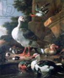 Melchior de Hondecoeter - Waterfowl in a classical landscape, 17th century