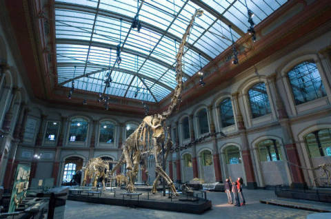 Dinosaur hall, children, Museum of Natural History, Berlin, Germany of artist Norbert Michalke (F1 Online), Fix, Fast, Firm, Proof, Fixed, Fastc, Beast, Strong