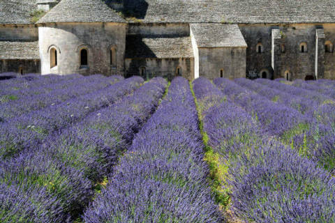 Lavender field and Senanque Abbey, Gordes, France of artist JB-Fotografie (F1 Online) as framed image
