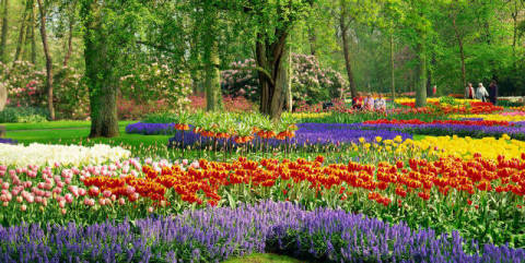 Tulpengarten, Holland, Niederlande, Tulpe of artist Oriental Touch (F1 Online), Boom, Tour, Bloom, Tulip, Glass, Belle, Flower, Europe