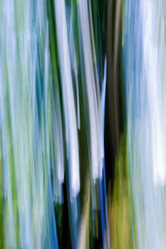 Abstraction of a tree, blurred of artist M. Werner (F1 Online) as framed image