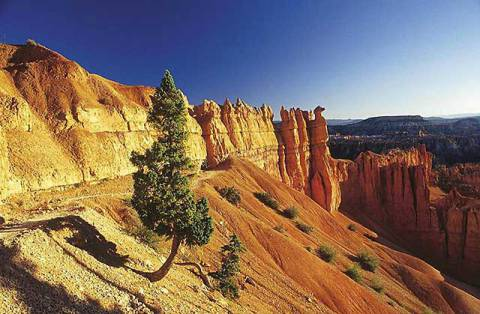 Kiefer an Schlucht, Bryce Canyon, Arizona of artist Christian Bauer (F1 Online), Sun, Sky, Jaw, Pine, Dawn, Tree, Gorge, Canon