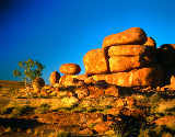 Diaphor (F1 Online) - Northern Territory, Devils Marbles Conservation Reserve
