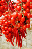 Glowimages RM (F1 Online) - Rote Chili-Paprikaschoten, Rote Chili-Paprikaschote, Halbinsel Sorrentina, Sorrentine-Halbinsel, Sorrento