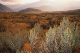 All Canada Photos (F1 Online) - Keremeos, Sagebrush, Vorhügel