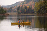 All Canada Photos (F1 Online) - Oxtongue Lake, Algonquin-Park, Tierischer Begleiter