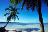 All Canada Photos (F1 Online) - Dominican Republic, Palm tree, Tropics, Tropical, Coastal