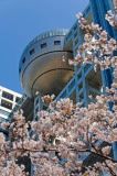 S. Tauqueur (F1 Online) - Fuji TV building with cherry blossoms in the foreground, Tokyo, Japan, low angle view