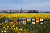 Beate Zoellner (F1 Online) - Colorful beehives in rape field with train in background, Sylt, Germany