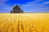 First Light (F1 Online) - Abandoned farmhouse in wind-blown durum wheat field, near Assiniboia, Saskatchewan, Canada