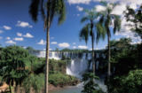Prisma (F1 Online) - Parque National do Iguazu, Cataratas do Iguazu, Iguazu Waterfalls, Foz do Iguazu, Parana, Brazil, South America, waterfall, palm