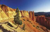 Christian Bauer (F1 Online) - Kiefer an Schlucht, Bryce Canyon, Arizona