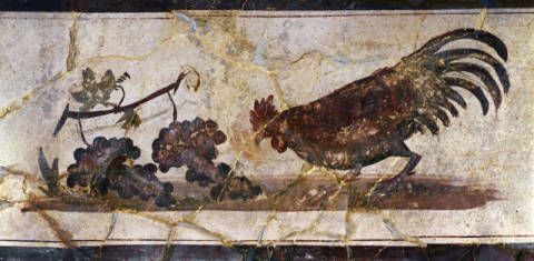 Cockerel w.Grapes / Roman Mural / C1st of artist 1. Jahrhundert as framed image