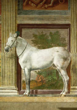 White Horse / Mural / G.Romano / C16th of artist Giulio Romano, Dei, Wall, Gray, Royal, Pippi, Origin, Fresco, Romano