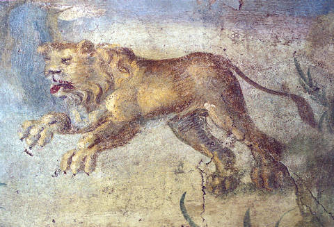 Pompeii / Fronto house / Lion / Fresco of artist AKG Anonymous, Cat, 1st, Big, Casa, Mural, Marco, Italy, House