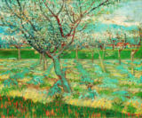 Vincent van Gogh - Blossoming fruit garden with apricot trees