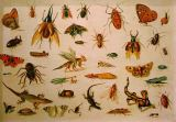 Jan van Kessel - Insects and Reptiles