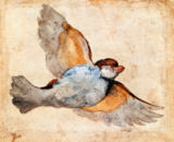 Giovanni da Udine - Flying sparrow