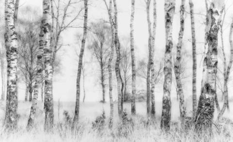 Black and white of artist Nel Talen, Pro, Fog, Amp, Mist, Tree, Line, Trunk, Light