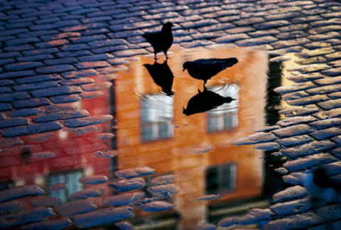 Pigeons of artist Allan Wallberg, Wet, Duo, Town, City, Rain, Pair, Taken, Water