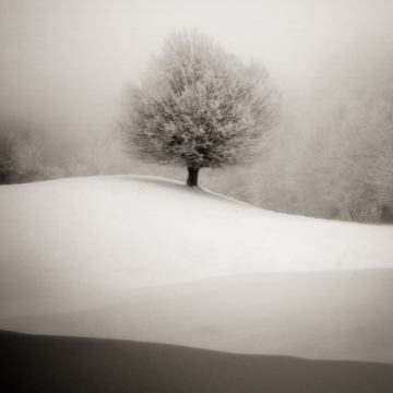 Winter degradee of artist S.C., Snow, Tree, Nature, Winter