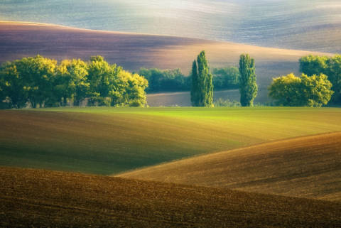 Brothers... of artist Krzysztof Browko, Ser, Hour, View, Trees, Field, Czech, Hills, Place