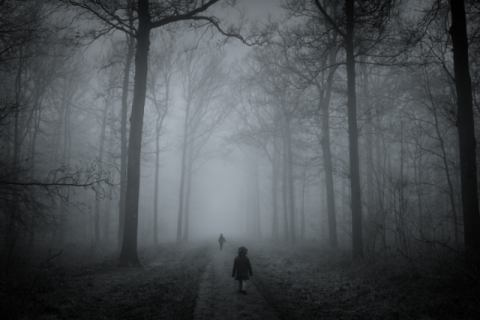 In the wood of artist Mirjam Delrue, Kid, Fog, Road, Play, Wood, Toned, Child, Forest