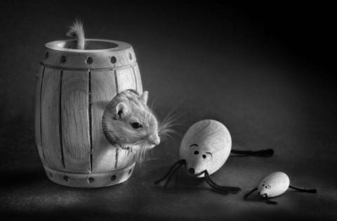 Untitled of artist Elena Arjona, Pet, Cute, Toys, Life, Still, Mouse, Animal, Barrel