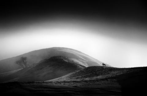 Wandering of artist olari ionut, Dog, Hill, Nature, Atmosphe, Silhouette