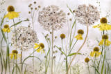 Mandy Disher - Alliums and heleniums