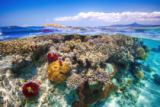 Barathieu Gabriel - Mayotte : The Reef