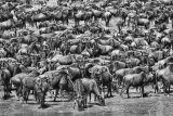 Alessandro Catta - Great Migration