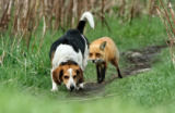 Mircea Costina - World\\\'s worst hunting dog