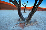 Trevor Cole - Ancient trees in the Vlei