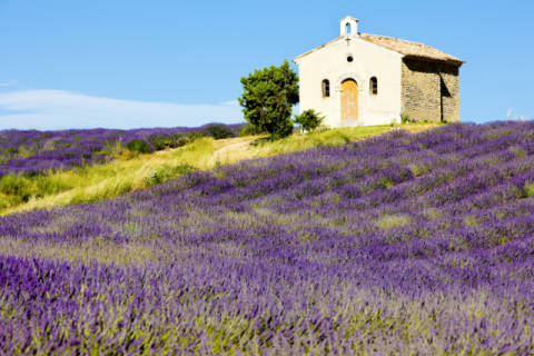 Chapel with lavender field, Plateau de Valensole, Provence, France of artist Richard Semik as framed image