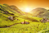Tomas Anderson - Beautiful sunset view over a vineyard in Italy