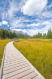 Kerry Snelson - Boardwalk in canmore,alberta