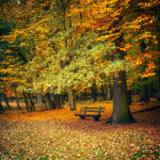 Sergey Borisov - Bench in autumn park