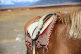 Fabrice Michaudeau - Closeup of horse saddle in Patagonian steppe, Argentina