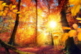 Farzin Salimi - Picturesque autumn in the forest with lots of sunshine and vibrant colors