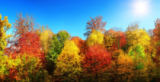 Farzin Salimi - Colorful autumn trees in the sun and bright blue sky